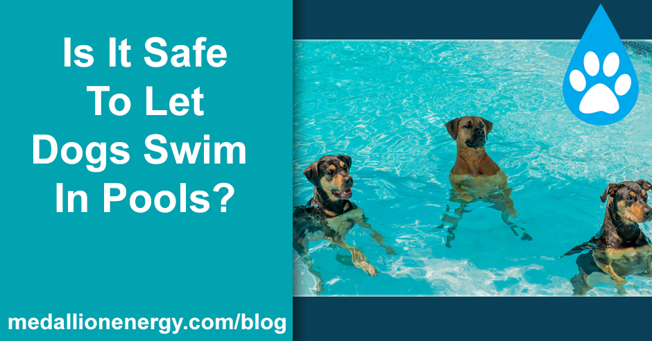 Is It Safe To Let Dogs Swim In Pools Pool Heat Pumps
