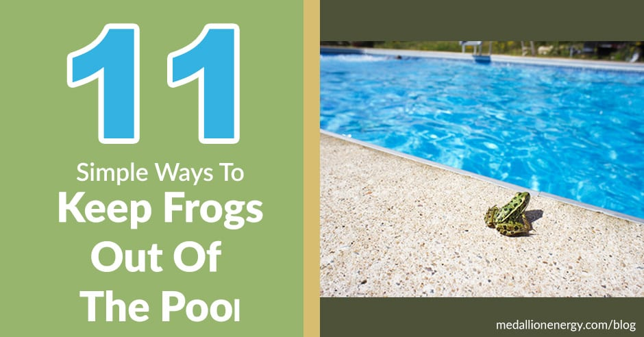 11 Simple Ways To Keep Frogs Out Of Your Pool