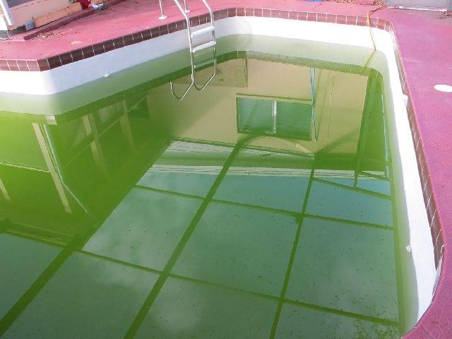 remove dark green pool algae get rid of dark green pool algae