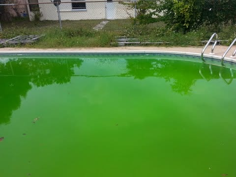 Fix a green pool in 5 easy steps get rid of pool algae - How to get rid of algae in a swimming pool ...
