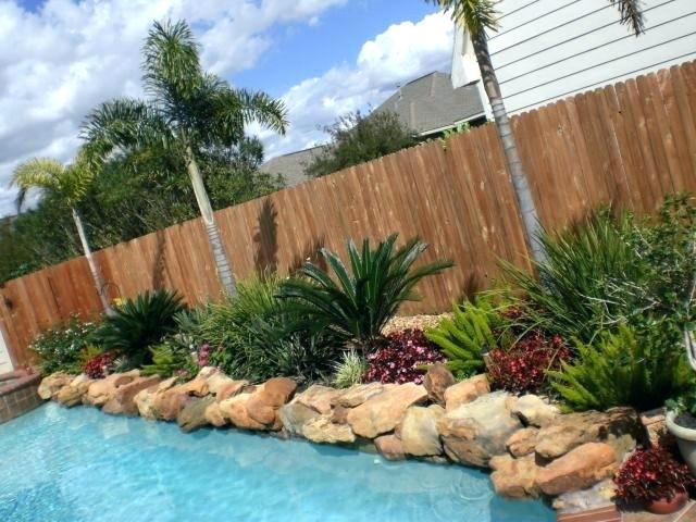 accent plants for pool landscaping
