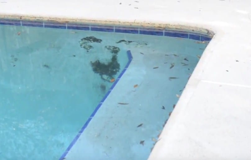 How To Remove Black Algae From Your Swimming Pool Kill