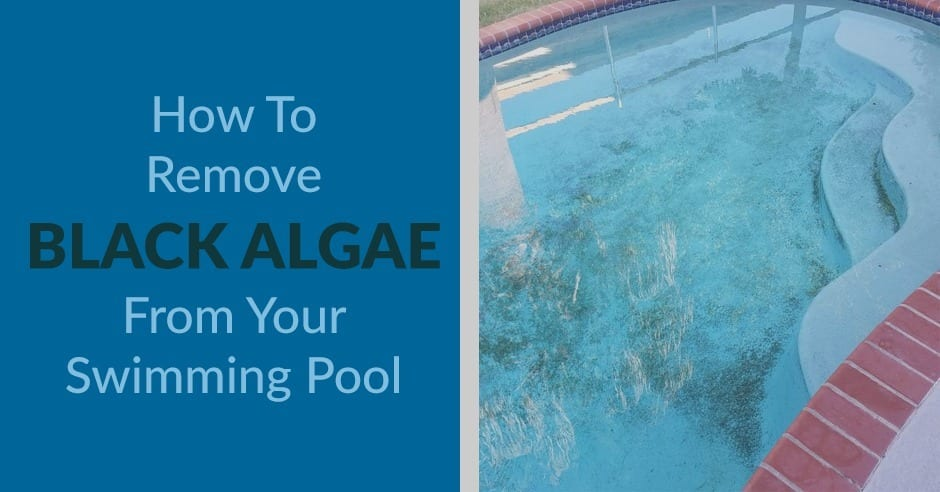How to remove black algae from your swimming pool kill - Black algae removal swimming pool ...