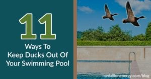 keep ducks out of pool and yard